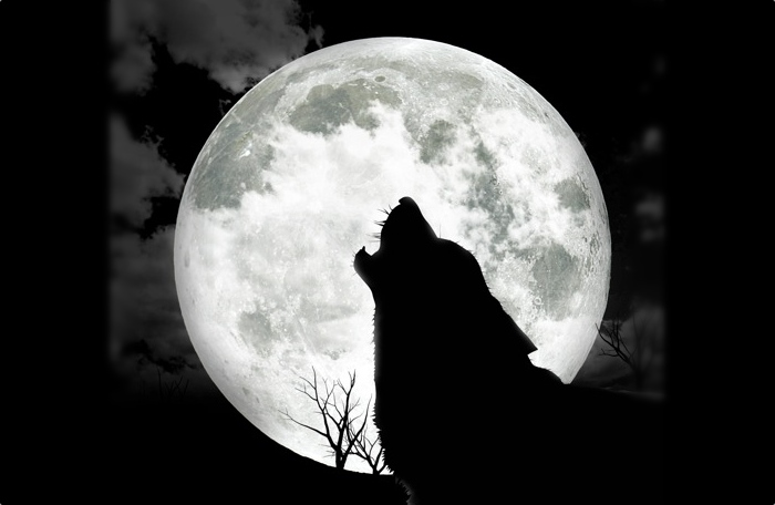 outer-banks-wolf-howl-halloween