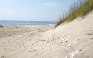 ocracoke-island-beaches