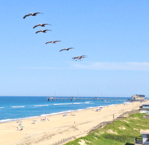 my-outer-banks-300x292_1