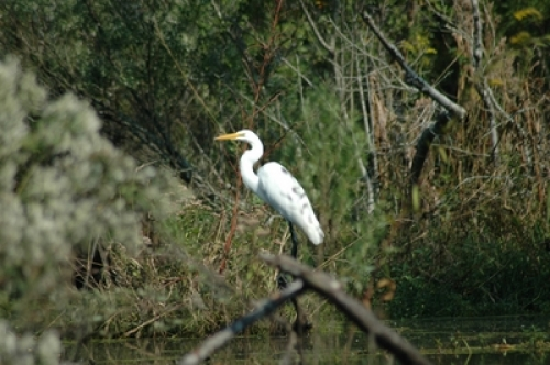 Outer Banks Birding in Kitty Hawk Woods Coastal Preserve