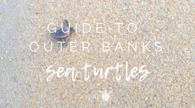 N.E.S.T.'s Guide to Outer Banks Sea Turtles