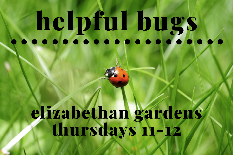 ladybug on grass with event details